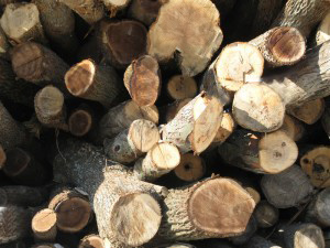 Whole Log Firewood